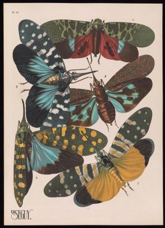 Insectes: 20 planches en phototypie coloriées au patron donnant 80 insectes et 16 compositions décoratives by Eugène Alain Séguy