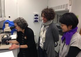 Debora Mayer (Harvard University), Marie-France Lemay (SML), and Soyeon Choi (YCBA) look at fibers under the stereomicroscope